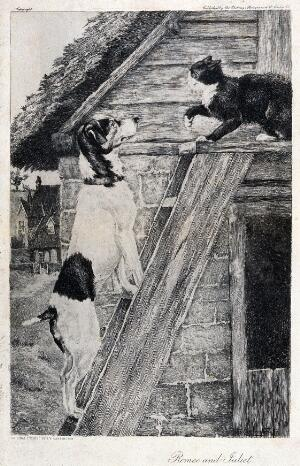 view A cat and a dog facing each other on top of a ladder. Etching by J. Y. Carrington, 18--.
