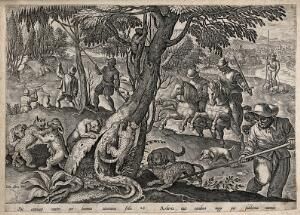 view Huntsmen killing polecats by spearing them with long pikes on the trees or by setting the dogs on them. Etching by J. van der Straet.