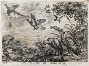 view Birds on a river bank: teal, duck, cormorant, bittern, owl, hawk and pheasant. Etching by J. Griffier, ca. 1655, after F. Barlow.