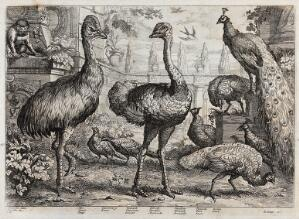 view Birds and animals in a neo-classical garden: ape, cassowary, pheasant, ostrich, swallow, peacocks and peahens. Etching by J. Griffier, ca. 1655, after F. Barlow.