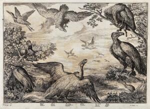 view Birds of prey gathered by a lakeside: falcon, heron, monkey, vulture, sea gull and eagle. Etching by J. Griffier after F. Barlow.