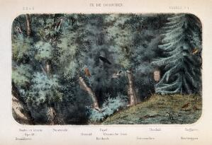 view Birds of the forest shown in their natural surroundings. Coloured lithograph by P. Trap.