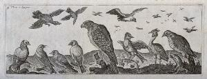 view Various birds in the air and on the ground with a large bird of prey in the centre. Engraving by H. Le Roy.