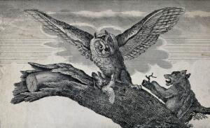 view An owl with a bird clutched in its talons is disturbed by a dog. Wood engraving.
