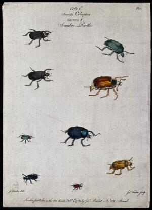 view Nine different scarabaeid beetles. Coloured engraving by J. Newton, ca. 1780, after J. Barbut.