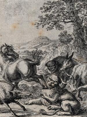 view An old lion lying on the ground is kicked by the hind hoof of a horse; illustration of a fable by J. Ogilby. Etching.