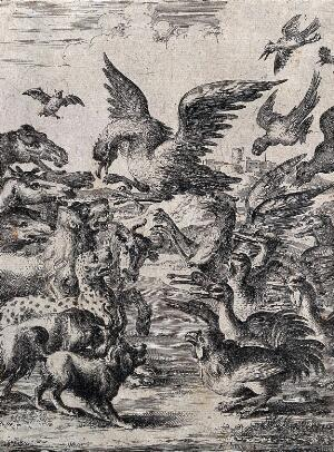 view A bird of prey is trying to land among a large crowd of animals; illustration of a fable. Etching by D. Stoop.