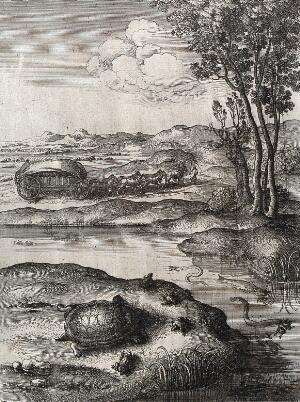 view A tortoise is surrounded by frogs on the shore of a lake in which eels are devouring other frogs. Etching by W. Hollar for a fable by Aesop.