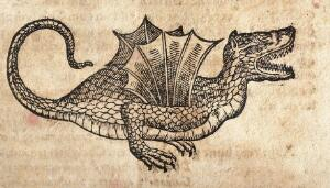 view A winged dragon. Woodcut.