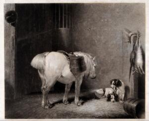 view A white pony in a stable. Engraving by F. Bromley after A. Cooper, 1836.