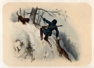 view A huntsman is dragging a dead chamois buck up a snowy slope while clinging to a tree branch, which snaps. Coloured lithograph by A. Strassgschwandtner after himself, ca. 1860.