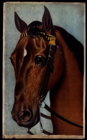 view A horse's head, wearing a bridle. Coloured mezzotint by C. Turner after G. Head, 1804.
