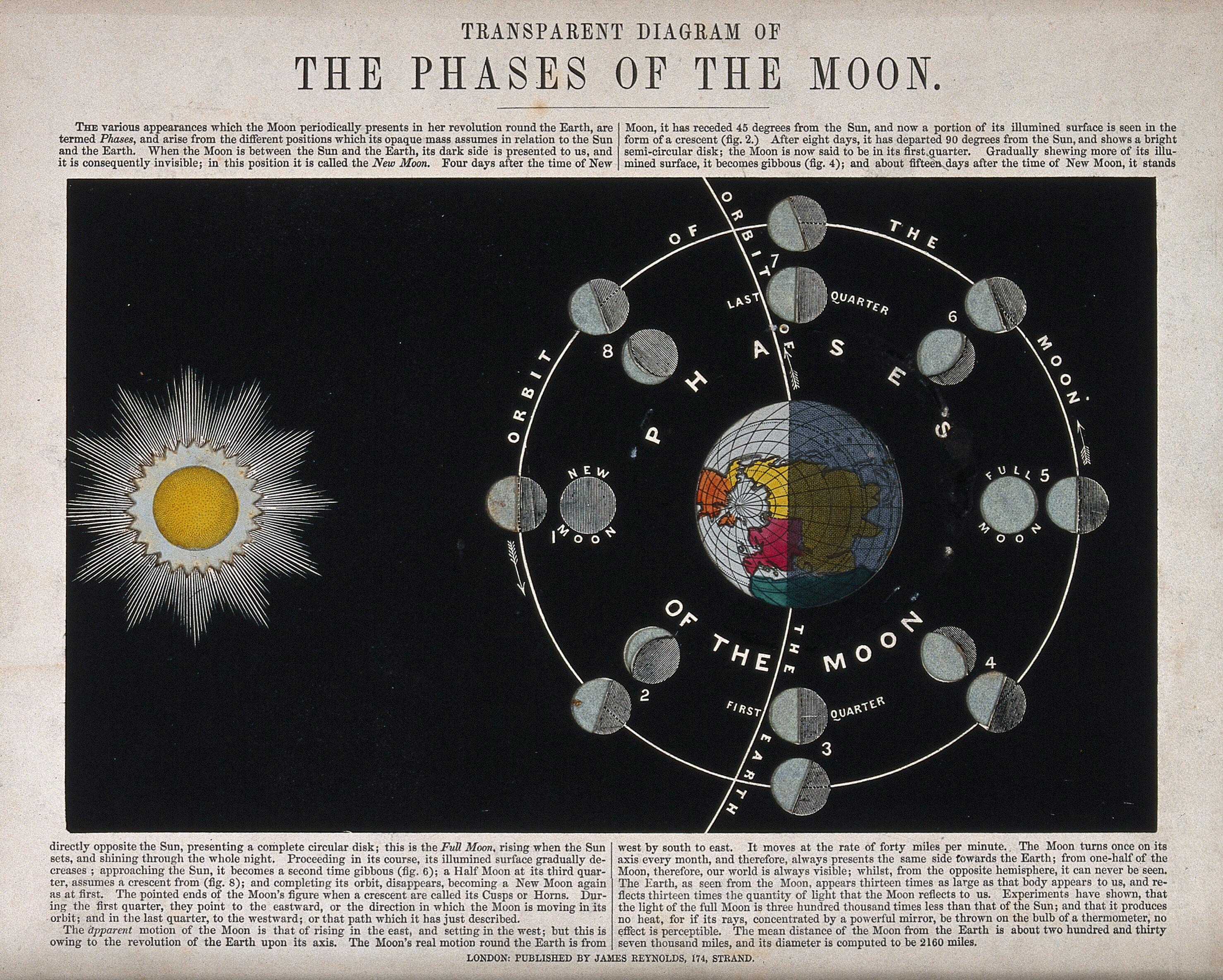 default astronomy a translucent diagram of the phases of the moon coloured