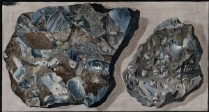 view Two mineral specimens found in the Fossa Grande on Mount Vesuvius. Coloured etching by Pietro Fabris, 1776.