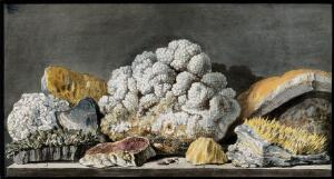 view Pieces of volcanic minerals from Solfatara. Coloured etching by Pietro Fabris, 1776.