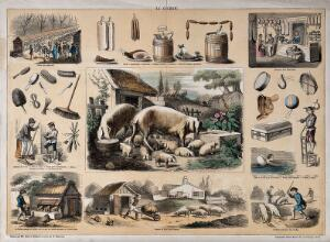 view Pigs and a litter of piglets, surrounded by vignettes showing the use of porcine products. Coloured engraving by J.F. Badoureau, ca. 1850, after P.A. Belin and C. Bethmont.