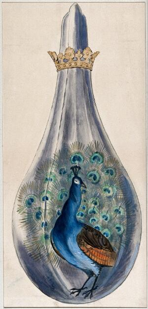 view A peacock in a crowned alchemical flask; representing the stage in the alchemical process when the substance breaks out into many colours. Watercolour painting.