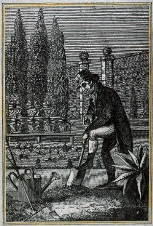 view Gardening: a man digging in a walled garden. Wood engraving.