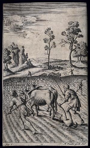 view A team of oxen being made to pull a plough. Engraving by M. van der Gucht.