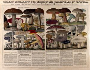 view Varieties of mushrooms and edible fungi. Coloured mixed method engraving by A. M. Perrot after E. Hocquart and J. C. Perrot.