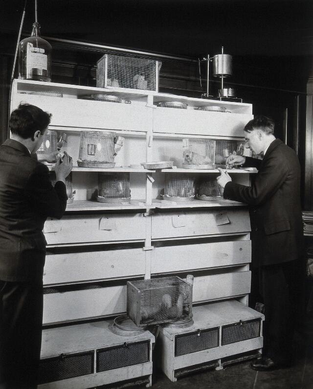 Philadelphia College of Pharmacy and Science: students experimenting with white rats in cages. Photograph, c. 1933.