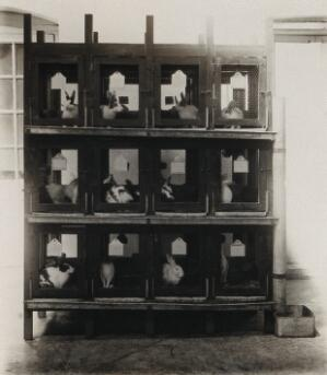 view The Pasteur Institute, Kasauli, India: production of the rabies vaccine: caged rabbits, after inoculation. Photograph, ca. 1910.