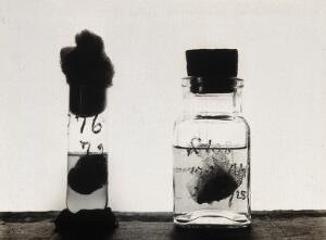 view The Pasteur Institute, Kasauli, India: stages in the preparation of the rabies vaccine: rabbit brains suspended in ether (right) and preserved in glycerine (left). Photograph, ca. 1910.