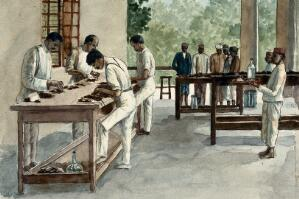 view India: a laboratory in which dead rats are being examined as part of a plague-prevention programme. Watercolour, by E. Schwarz, 1915/1935 (?).
