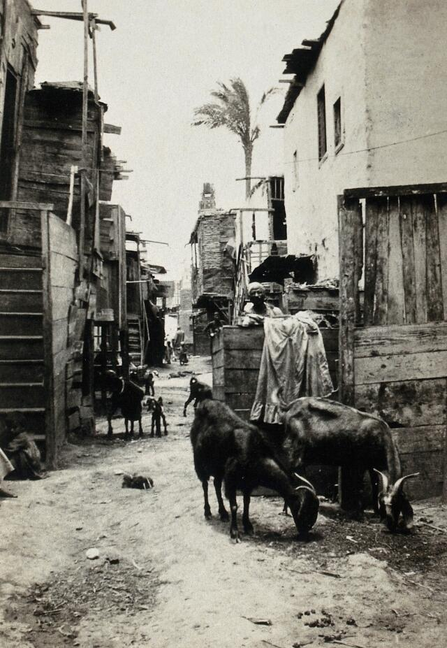 Alexandria (Rue Ibrahimich), Egypt: a city street with goats, during a typhus epidemic. Photograph, 1915/1925 (?).
