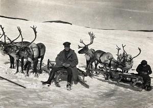 view World War One: Russia: a reindeer team. Photograph, 1914/1918.