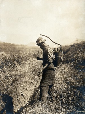 view Miraflores, the Panama Canal Zone: a West Indian man sprays larvicide into a ditch as part of a mosquito control programme implemented during the construction of the Panama Canal. Photograph, 1910.