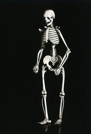 view A human skeleton. Photograph, ca. 1929.
