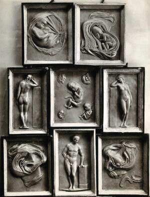 view Human reproduction and gestation: foetuses and the male and female reproductive systems in cross-section, and three nudes. Photograph, 1920/1940, of eight framed bas-reliefs, 18--?