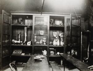 view Cooke's School of Anatomy (London School of Anatomy), London: interior, showing anatomical specimens in a cupboard. Photograph, ca. 192-.