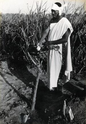 view Africa: a man standing over a pot which is supported by the pronged branches of a small tree. Photograph (by Kurt Lubinski?), 1940/1960.