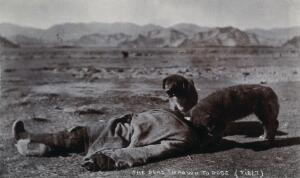 view Tibet: a dead body being eaten by dogs. Photograph, 19--.