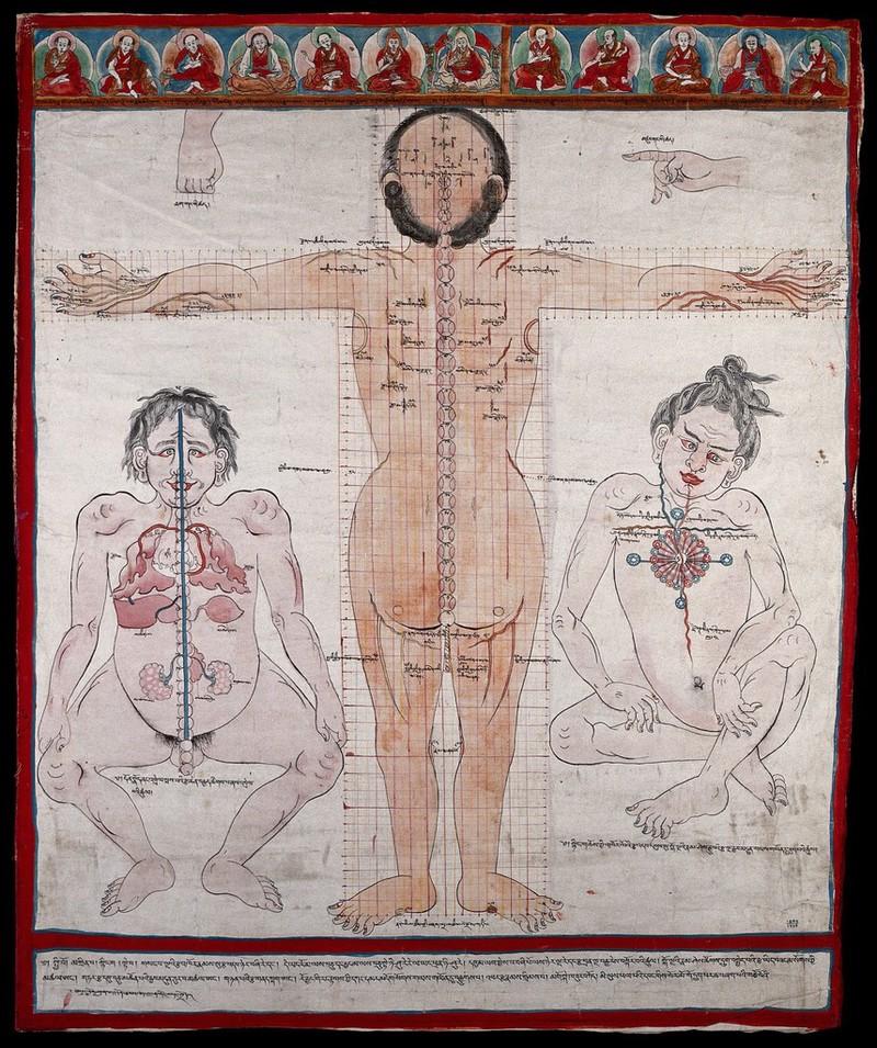 Boobtit tibetan medicine slave nipple