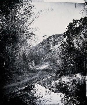 view Foliage at Nem Kong, Formosa (Taiwan). Photograph, 1981, from a negative by John Thomson, 1871.