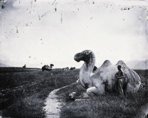 view Camel sculptures on the road to the Ming tombs outside Peking. Photograph, 1981, from a negative by John Thomson, 1871.