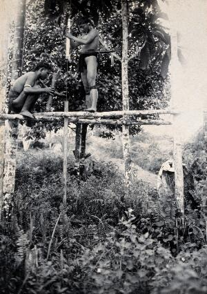 view Sarawak: two Kenyah people boring a blowpipe. Photograph.