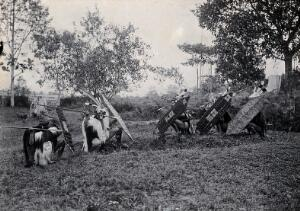 view Sarawak: five native Kenyah warriors in a warfare ritual. Photograph.