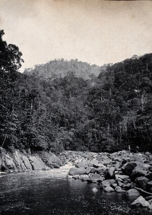 view Sarawak: falls on the Baram River. Photograph.