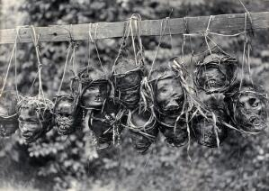 view Sarawak: preserved and decorated human heads taken and strung up by Sea Dayaks. Photograph.