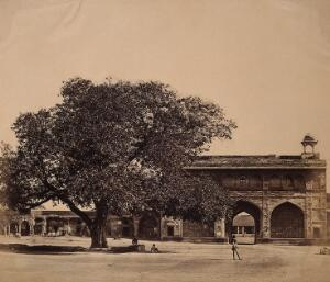 view India: a tree in the grounds of a palace under which three hundred Europeans were murdered. Photograph by F. Beato, c. 1858.
