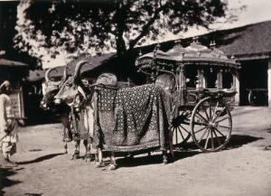 view India: a decorative carriage pulled by oxen decorated with ornate textiles and bells. Photograph, ca. 1900.