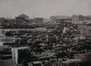view South Africa: carts and oxen at the morning market. 1896.