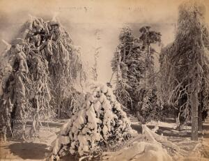 view Luna Island, Niagara, United States of America: snow-covered trees. Photograph by Francis Frith, ca. 1880.