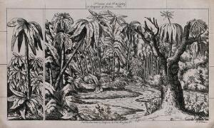 view A lake surrounded by palm trees. Lithograph.
