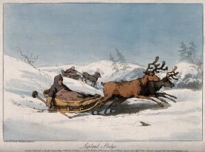 view Reindeer pulling children in sledges in Lapland. Coloured aquatint with etching by J.A. Atkinson.