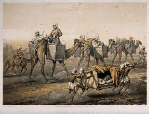 view Sepoy Rebellion: British officers travelling in panniers on the backs of camels and borne in a litter by Indian men. Tinted lithograph by W. Simpson, 1859, after G.F. Atkinson.